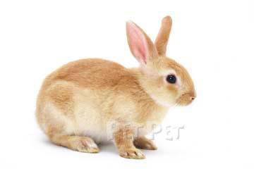 ウサギの画像 p1_26